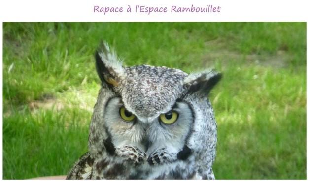 espace_rambouillet_rapace