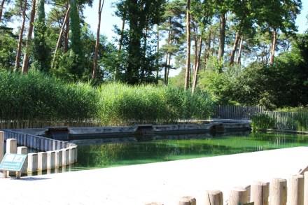 huttopia-piscine-naturelle
