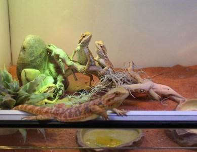 Reptile-Tom&Co