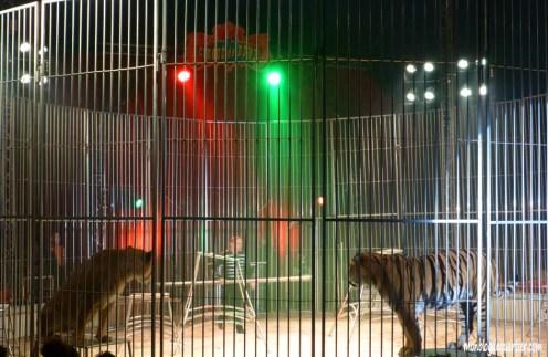 Cirque-fauves