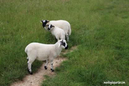 Ferme-noue-moutons